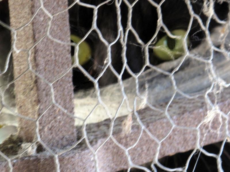 madisol-velimir-dugina-11